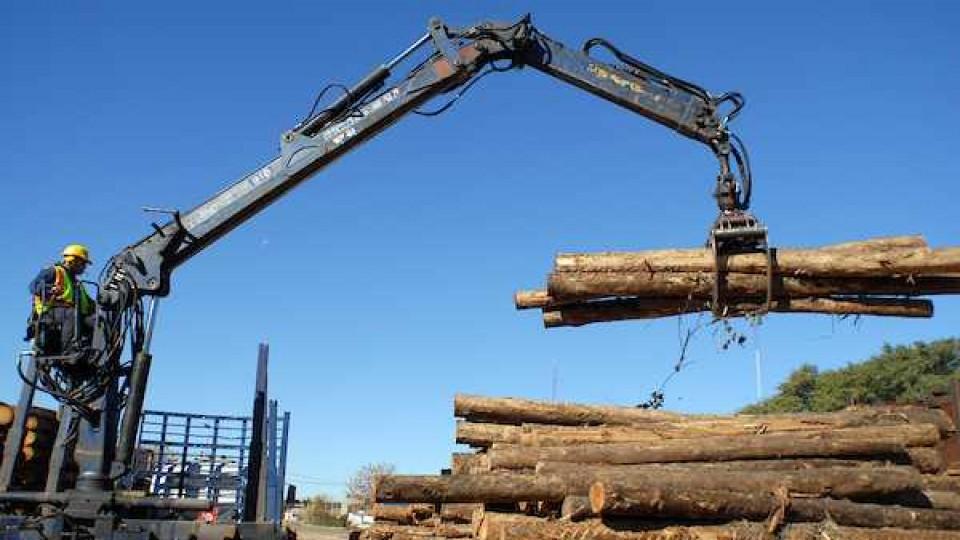 El rubro forestal representa 25 mil puestos de trabajo y significa el 3,6% del PBI —  Economía — Dinámica Rural | El Espectador 810