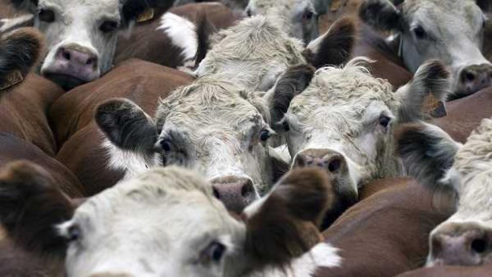 El novillo gordo abre la semana a 4.35 dól/kg —  Ganadería — Dinámica Rural | El Espectador 810