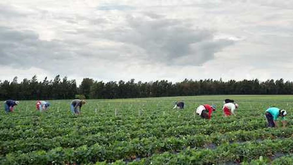 Análisis sobre la investigación del MGAP ante irregularidades en el Fondo Nacional de la Granja —  Granja — Dinámica Rural | El Espectador 810
