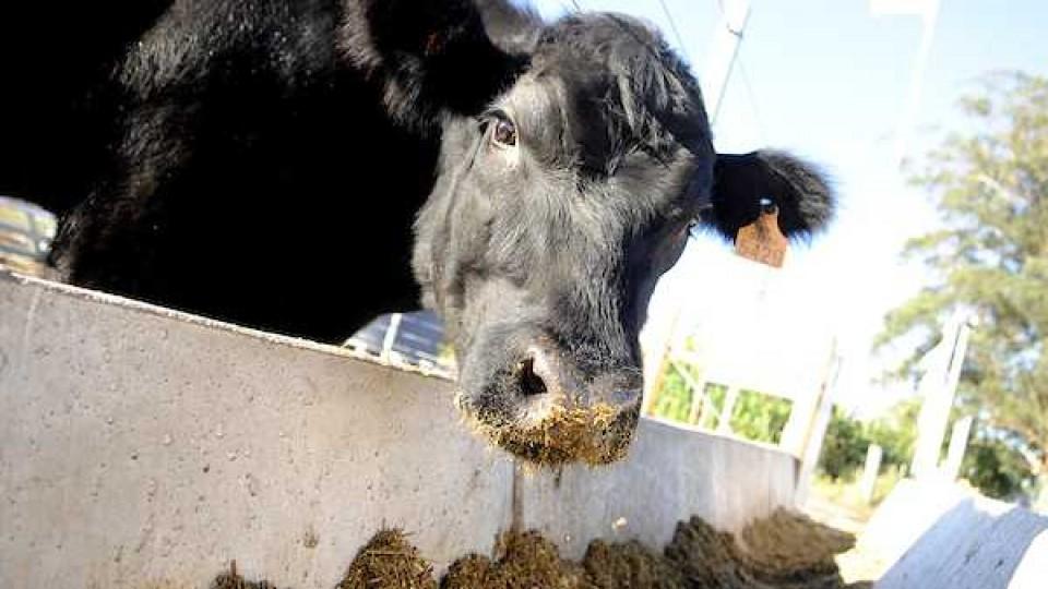 Transformación: De la soja a la ganadería —  Agricultura — Dinámica Rural | El Espectador 810