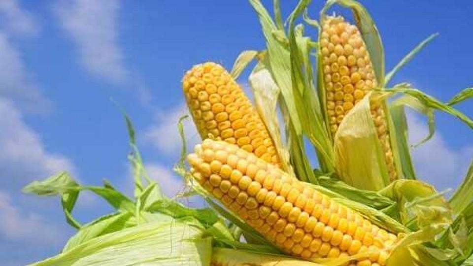 Las lluvias incidieron favorablemente en los cultivos de verano —  Agricultura — Dinámica Rural | El Espectador 810