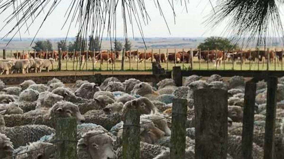 'El diagnóstico está, ahora hay que actuar en función de los mercados' dice García Pintos —  Ganadería — Dinámica Rural | El Espectador 810