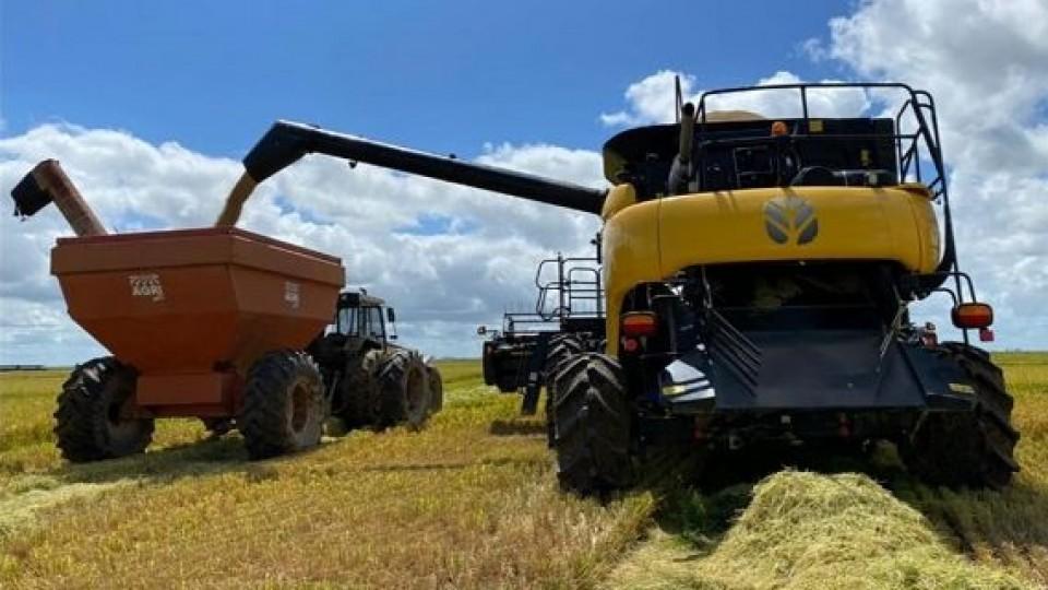 Los rindes para el arroz superan los 9 mil kgs/há —  Agricultura — Dinámica Rural   El Espectador 810