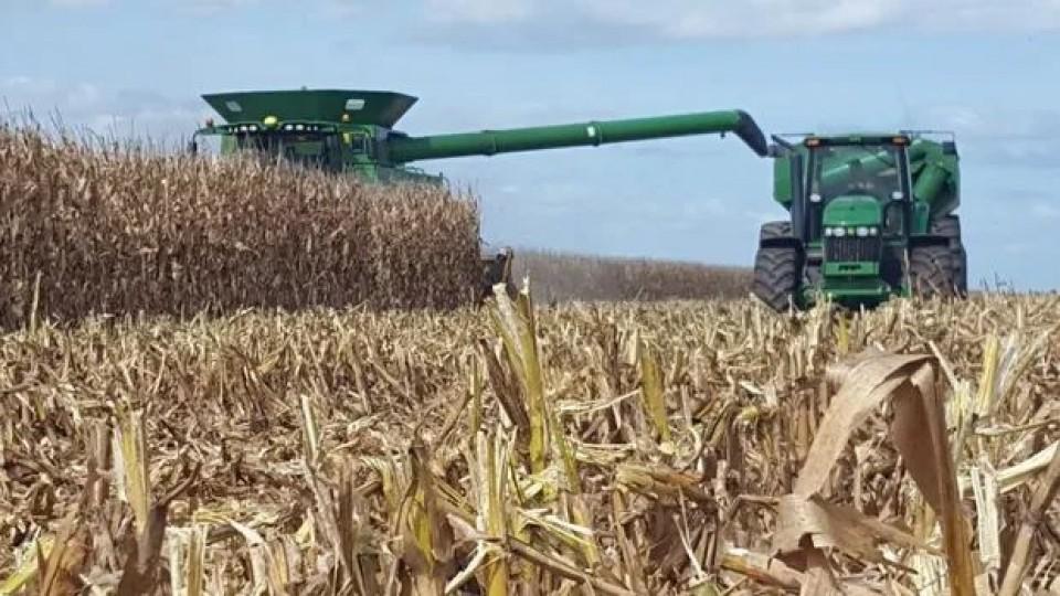 En algunos casos el maíz alcanzó los 9 mil kilos por há —  Agricultura — Dinámica Rural   El Espectador 810