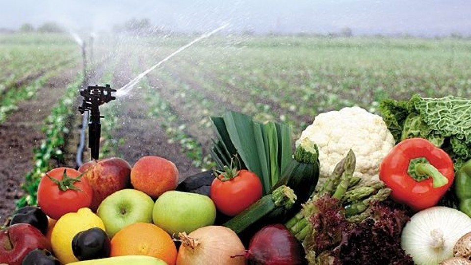 El kilo canasta frutihortícola descendió 0.1% para ubicarse en 36.4 pesos/kgs —  Granja — Dinámica Rural | El Espectador 810