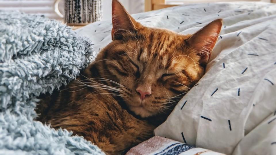 Castración canina y felina —  Perros y gatos: curiosidades que no muerden — Bien Igual | El Espectador 810
