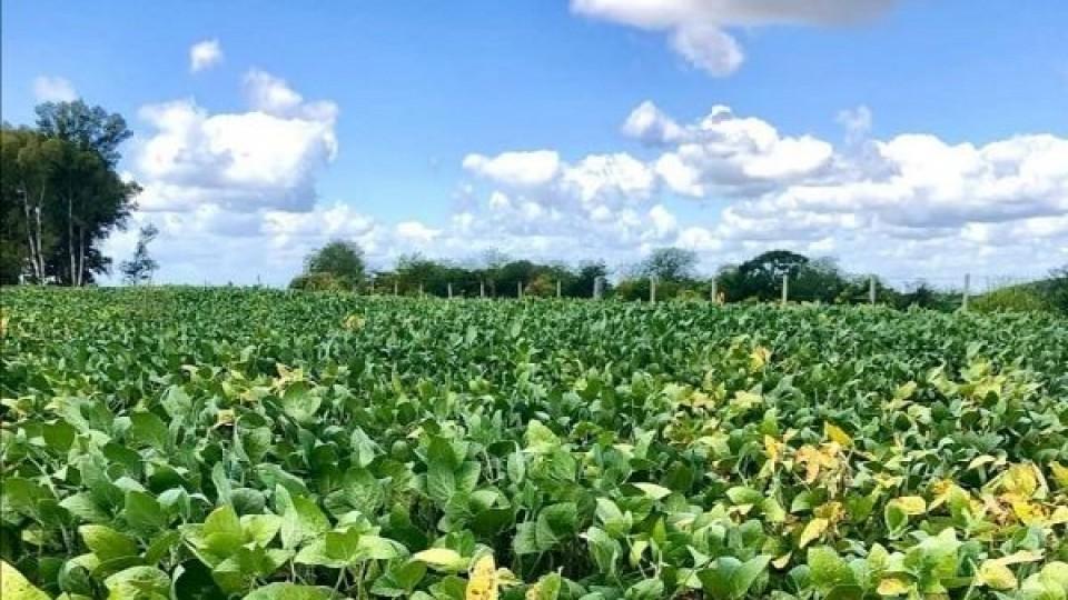 A. Alayón: ''Pensamos en la campaña de invierno, pero insistimos con los seguros agrícolas'' —  Agricultura — Dinámica Rural   El Espectador 810