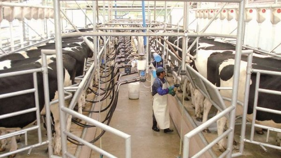 Gremiales lecheras solicitaron aumento del precio de la leche —  Lechería — Dinámica Rural   El Espectador 810
