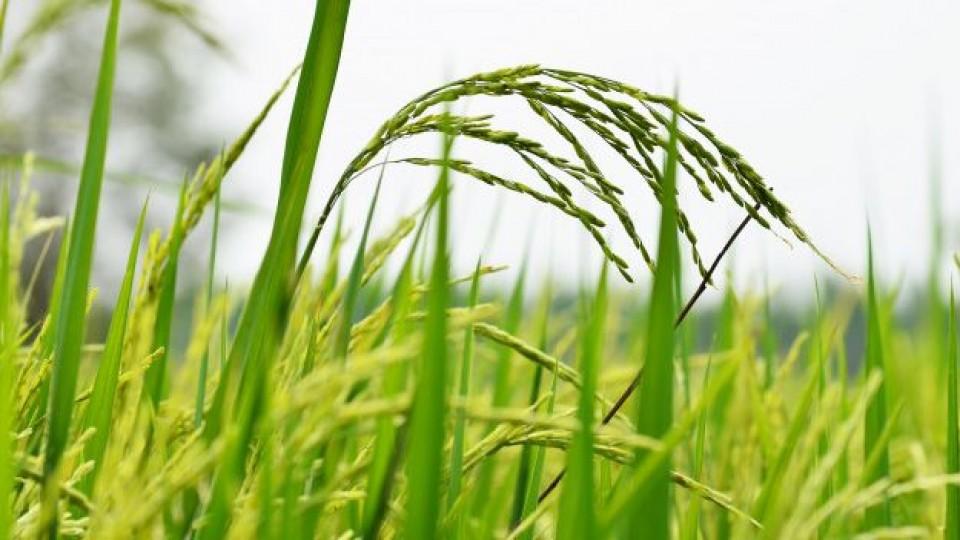 S. Ferrés: Esta zafra superó las expectativas lo que esperamos rindes promedio de 9000 kgs/há —  Agricultura — Dinámica Rural | El Espectador 810