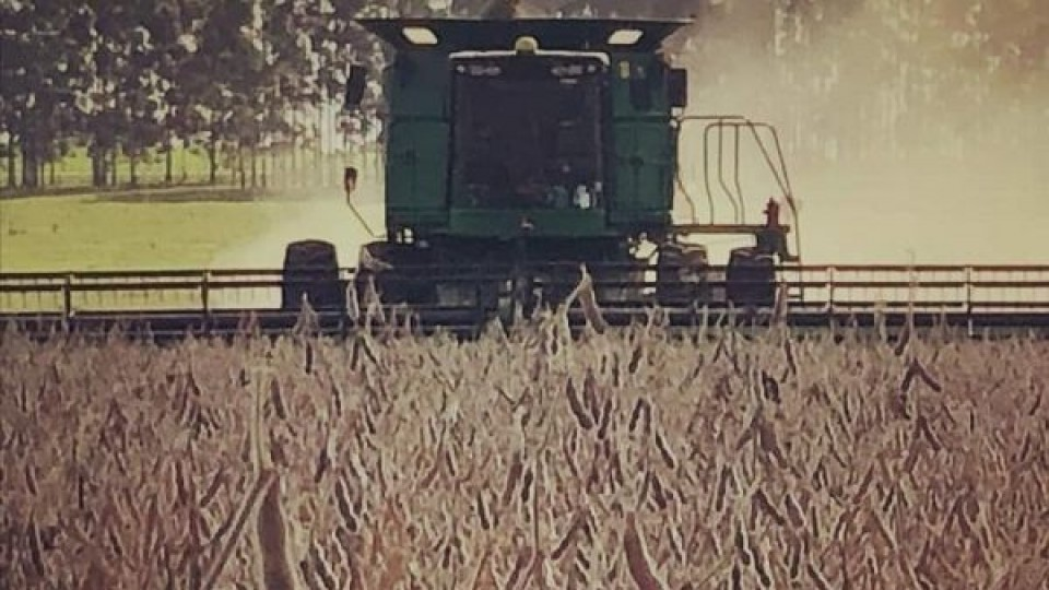 G. Carballal: ''En soja los rindes van desde 1.500 a 2.500 kilos por há'' —  Agricultura — Dinámica Rural | El Espectador 810
