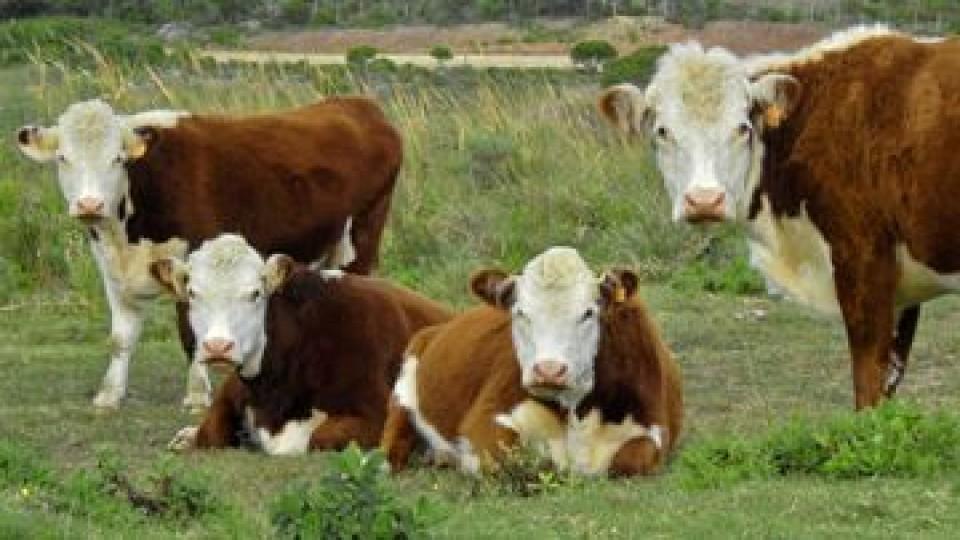 INIA se adelanta al invierno —  Ganadería — Dinámica Rural   El Espectador 810
