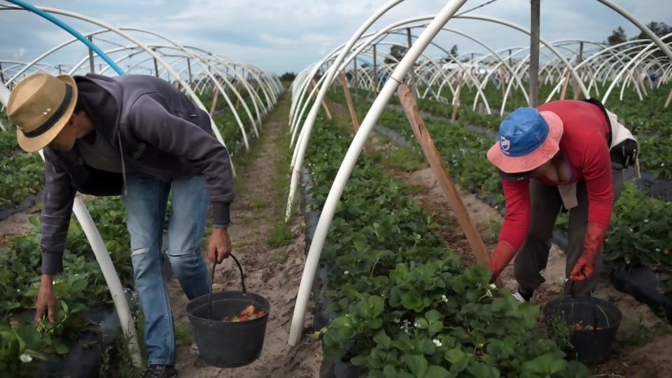 30 de abril Día del Trabajador Rural —  Qué tiene la tarde — Más Temprano Que Tarde | El Espectador 810