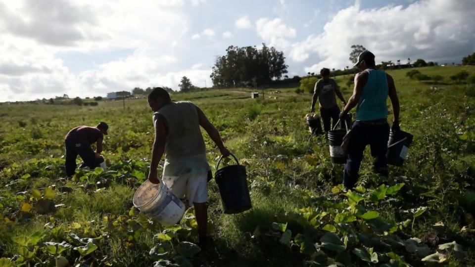 La Unión de Trabajadores Rurales confirmó incumplimiento de protocolo sanitario en el sector citrícola —  Entrevistas — Al Día 810 | El Espectador 810