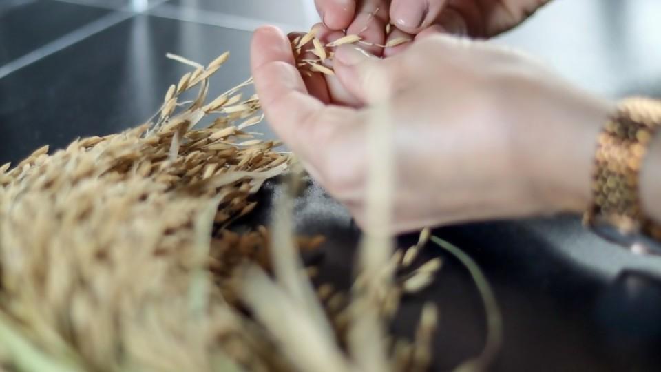 El arroz, su cultivo, su química y sus secretos en la cocina —  Leticia Cicero — No Toquen Nada | El Espectador 810