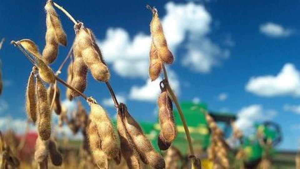 Soja: Sigue al alza y alcanza los 600 dólares —  Agricultura — Dinámica Rural | El Espectador 810