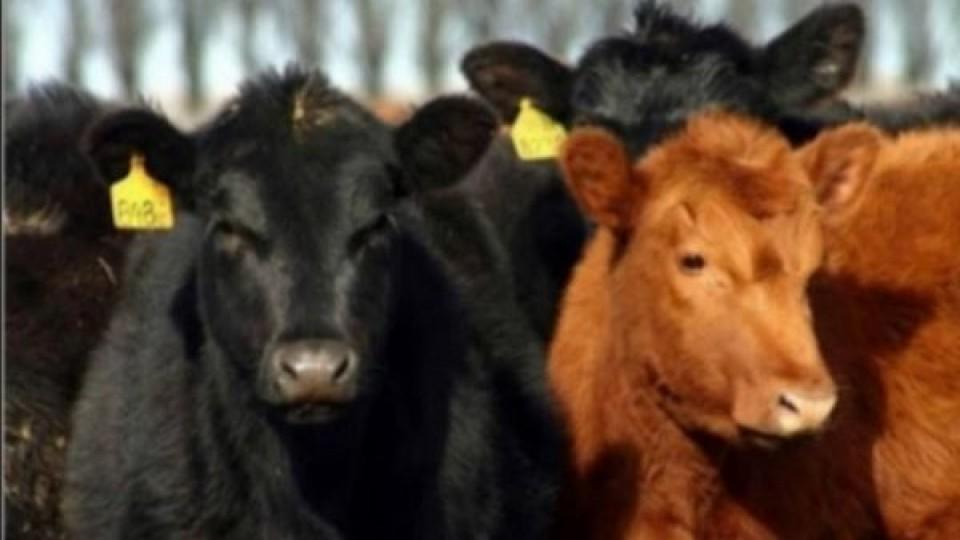 J. A. Dutra: ''El comprador premió a los ganados de calidad'' —  Mercados — Dinámica Rural | El Espectador 810