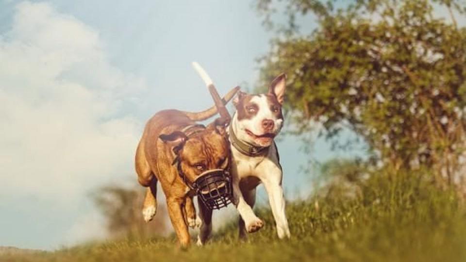 Perros peligrosos: proyecto de ley prohíbe 15 razas —  La Entrevista — Más Temprano Que Tarde | El Espectador 810