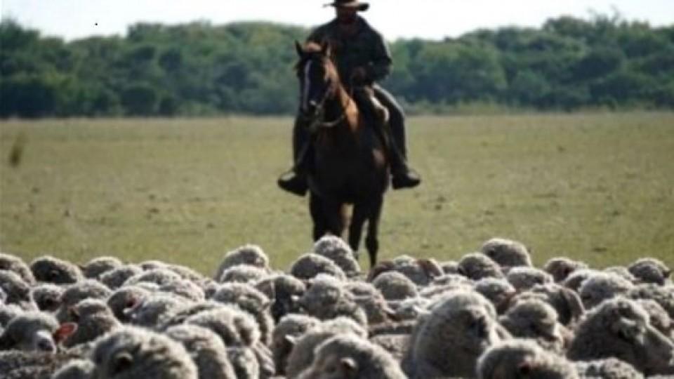 Carne ovina: En la última década los precios del producto crecieron 63% —  Comercio Exterior — Dinámica Rural | El Espectador 810
