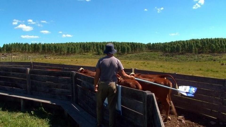 M. Del Campo: ''Al bienestar animal hay qué garantizarlo con ciencia, investigación, articulación y ejecución'' —  Política — Dinámica Rural | El Espectador 810