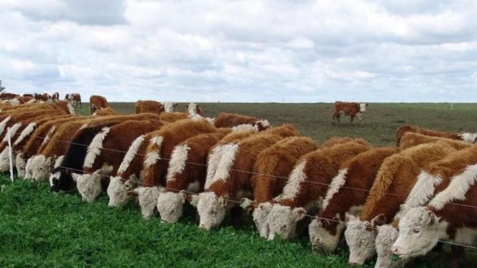 Escalón por escalón hacia la eficiencia productiva y económica —  Ganadería — Dinámica Rural | El Espectador 810