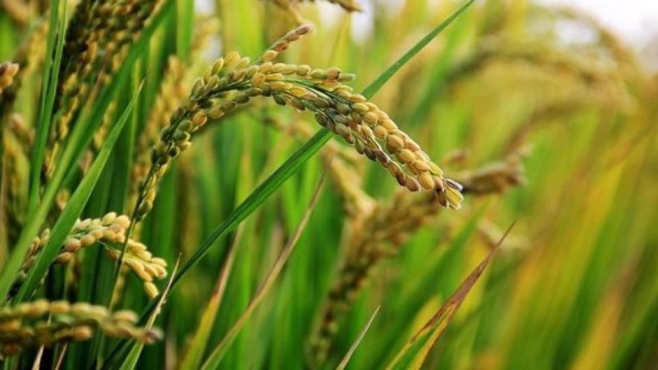 J. Terra: ''Están las condiciones para qué el arroz aumente el área'' —  Investigación — Dinámica Rural   El Espectador 810