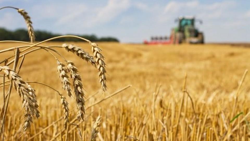 Cultivos: Avanza siembra de trigo en 70% y en cebada 50% —  Agricultura — Dinámica Rural   El Espectador 810