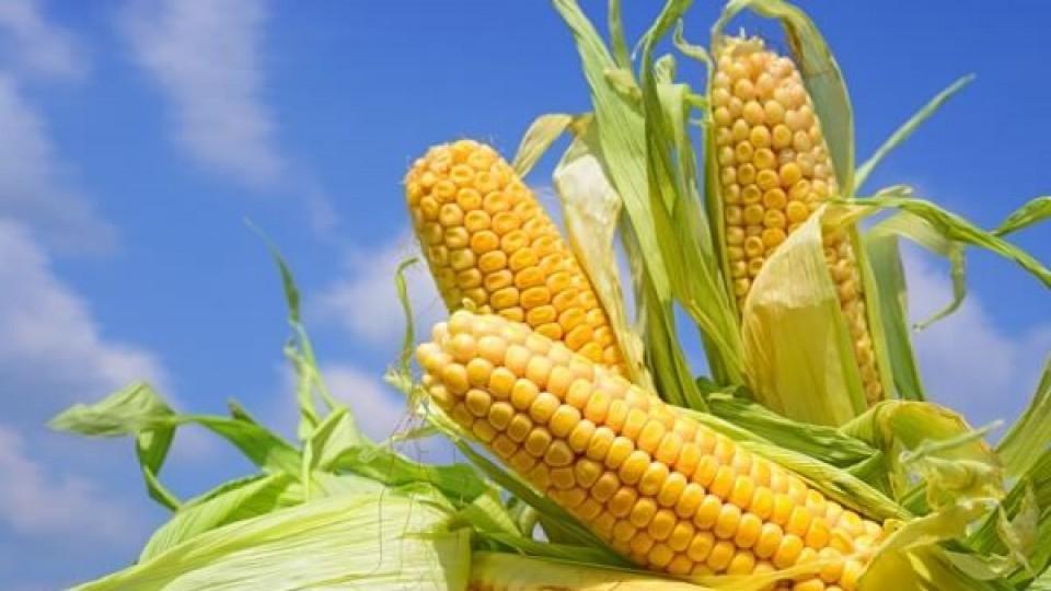 C. Ruso: ''Es exponencial el crecimiento del maíz'' —  Comercio Exterior — Dinámica Rural   El Espectador 810