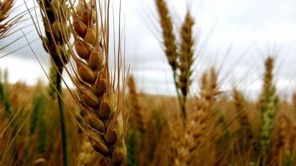 USDA: En trigo, la calidad  ''buena a excelente'' es de las más bajas de los últimos 40 años —  Comercio Exterior — Dinámica Rural   El Espectador 810