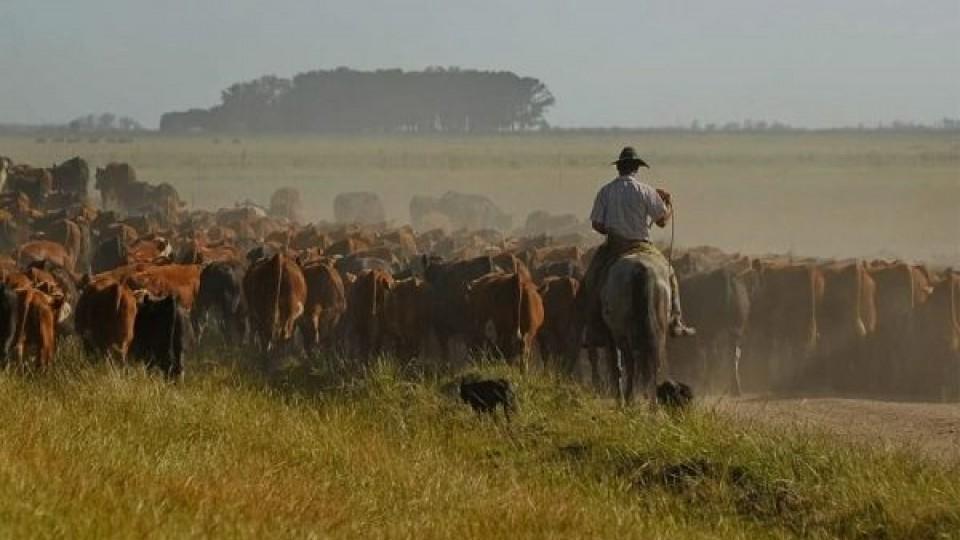 A. Álvarez: El IP en Paysandú superará el 80% —  Ganadería — Dinámica Rural   El Espectador 810