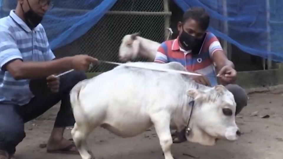 La vaca y el burro —  De qué te reís: Diego Bello — Más Temprano Que Tarde | El Espectador 810