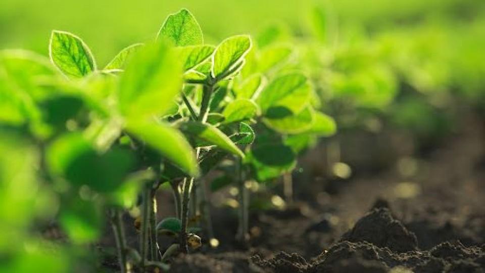 Tras un zafra de soja magra, las perspectivas de invierno y verano son muy buenas —  Agricultura — Dinámica Rural   El Espectador 810