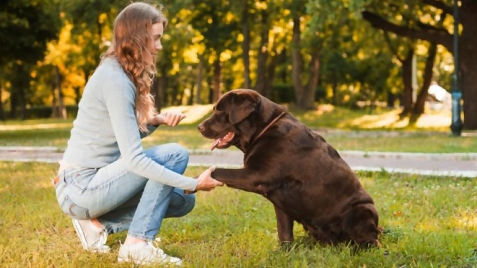 Límites para las mascotas —  Perros y gatos: curiosidades que no muerden — Bien Igual | El Espectador 810