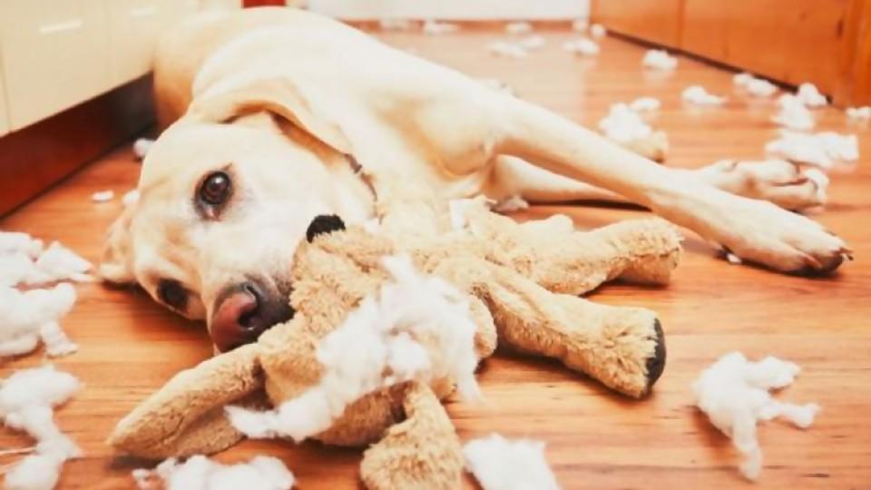 Trastornos de comportamiento —  Perros y gatos: curiosidades que no muerden — Bien Igual | El Espectador 810