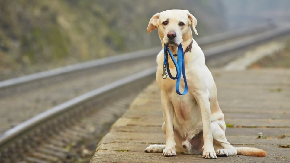 ¿Dónde está mi perro? —  Perros y gatos: curiosidades que no muerden — Bien Igual | El Espectador 810