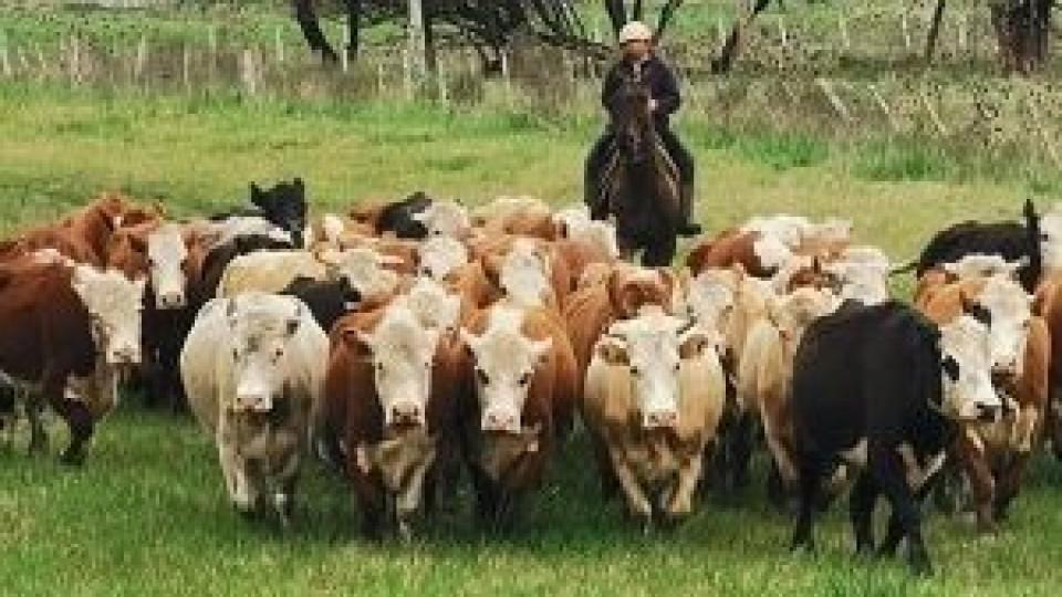 Reproducción: En este período es cuando ''nos jugamos gran parte del año'' —  Extensión — Dinámica Rural | El Espectador 810