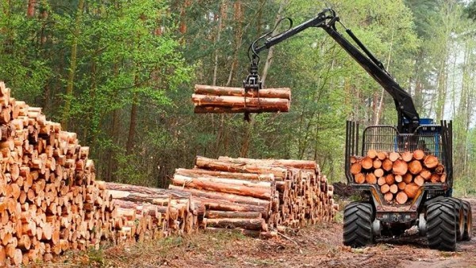 La SPF fue enfática al desmentir que la forestación ocupe suelos agrícolas —  Inversión — Dinámica Rural | El Espectador 810