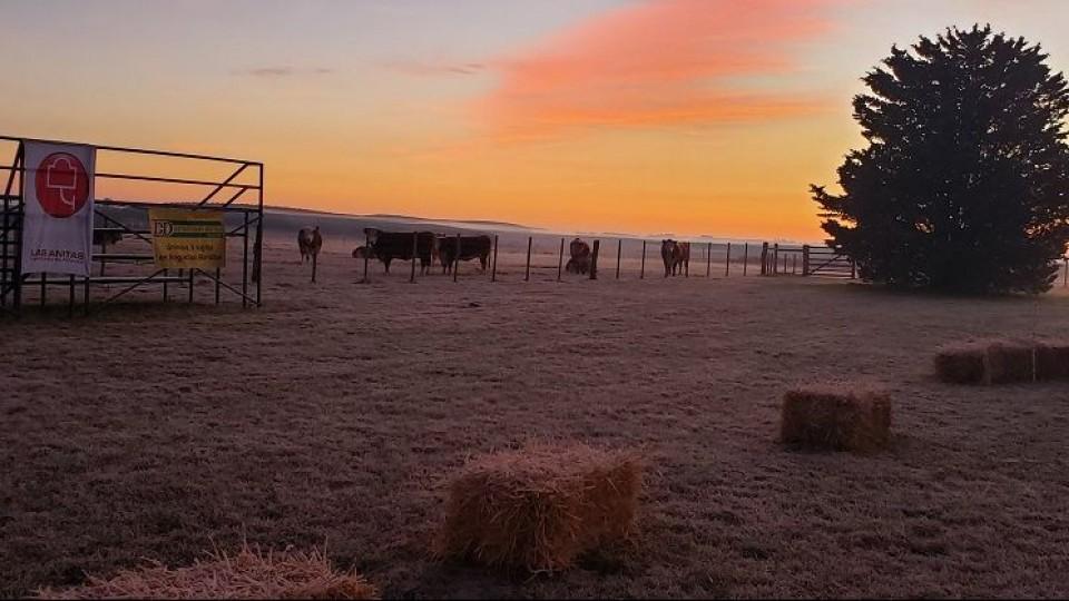 'Excelentes precios' en el Clásico de Hembras de Las Anitas —  Ganadería — Dinámica Rural | El Espectador 810