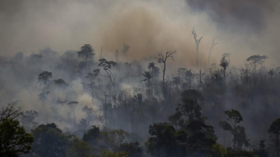 ¿Qué está pasando en la Amazonia? Causas concretas y simbólicas —  Denise Mota — No Toquen Nada | El Espectador 810