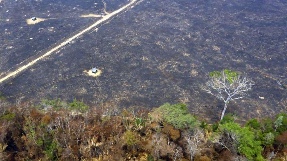 Amazonía: mucho humo y pocas nueces —  GPS Activado: Álvaro Padrón — Más Temprano Que Tarde | El Espectador 810
