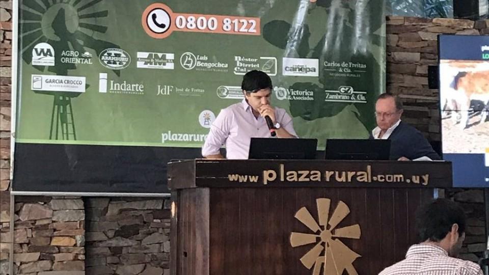 Con prácticamente 100% de colocación los valores en Plazarural van de menos a más —  Ganadería — Dinámica Rural | El Espectador 810