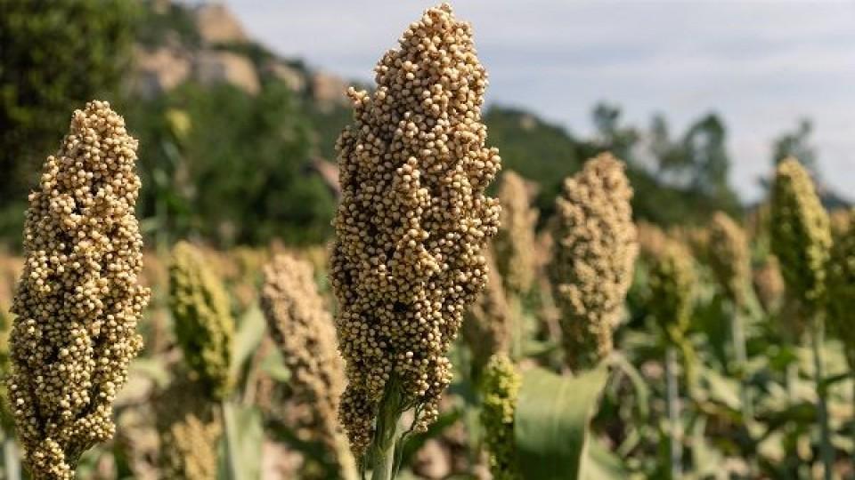 Prolesa extiende su plan fertilizantes 2019 —  Lechería — Dinámica Rural | El Espectador 810