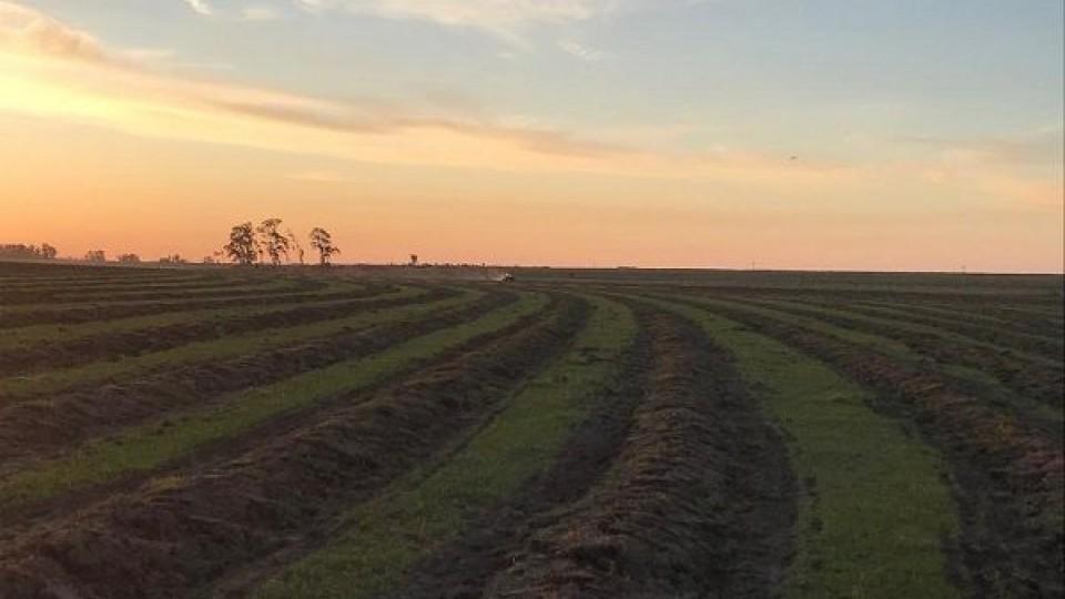 Se sembró el 98% del área planificada de arroz —  Agricultura — Dinámica Rural | El Espectador 810