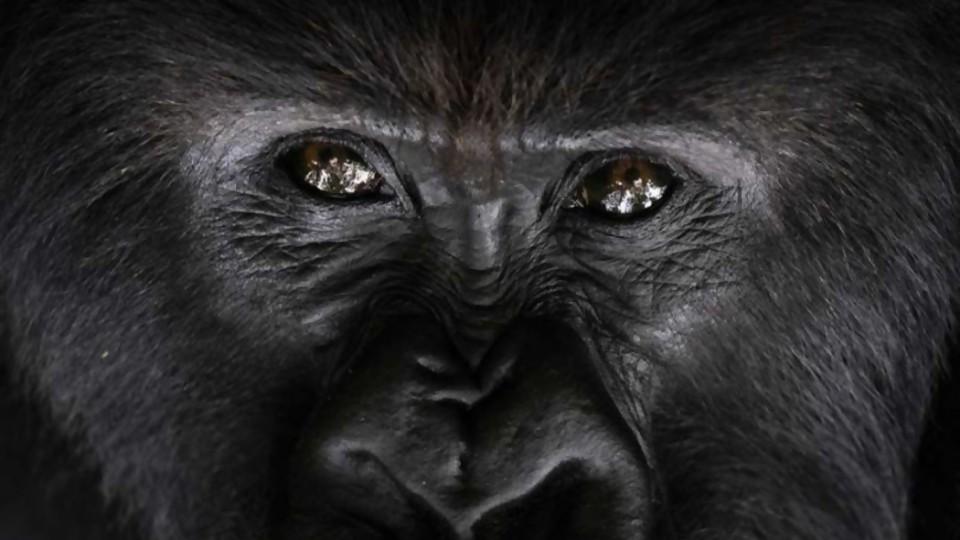 ¿Qué puede ser salvado? —  Miguel Ángel Dobrich — Otro Elefante | El Espectador 810