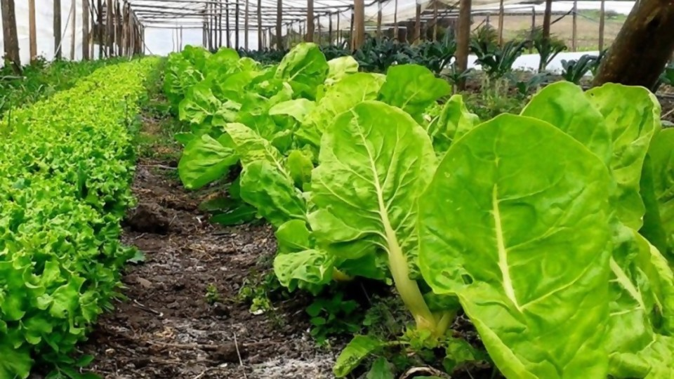 Justa, ecológica y renovable: las bases de la agroecología y su plan en Uruguay —  Entrevistas — No Toquen Nada | El Espectador 810