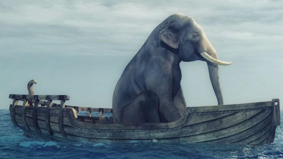 Objetivo 2020: Elefante al agua —  Audios — Otro Elefante | El Espectador 810