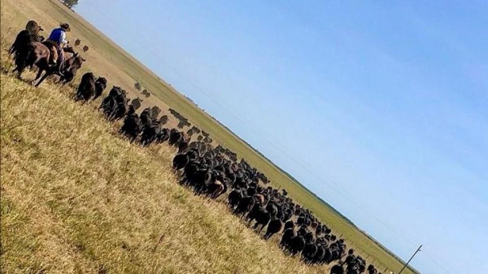 Es esperable que los precios de los ganados sigan estables, aunque depende del factor clima —  Ganadería — Dinámica Rural | El Espectador 810