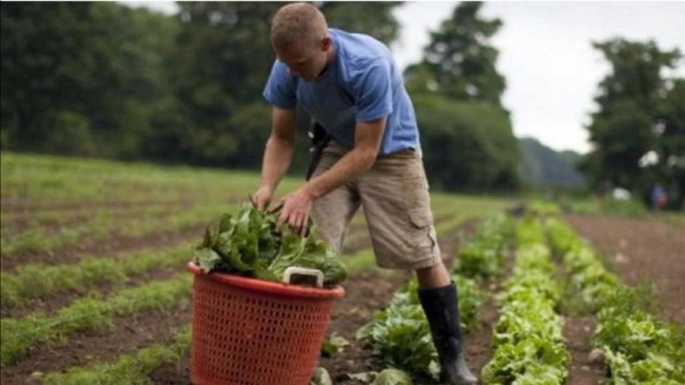 Columna: La agricultura orgánica es una alternativa validada, que pone énfasis en la fertilidad del suelo —  Agricultura — Dinámica Rural | El Espectador 810