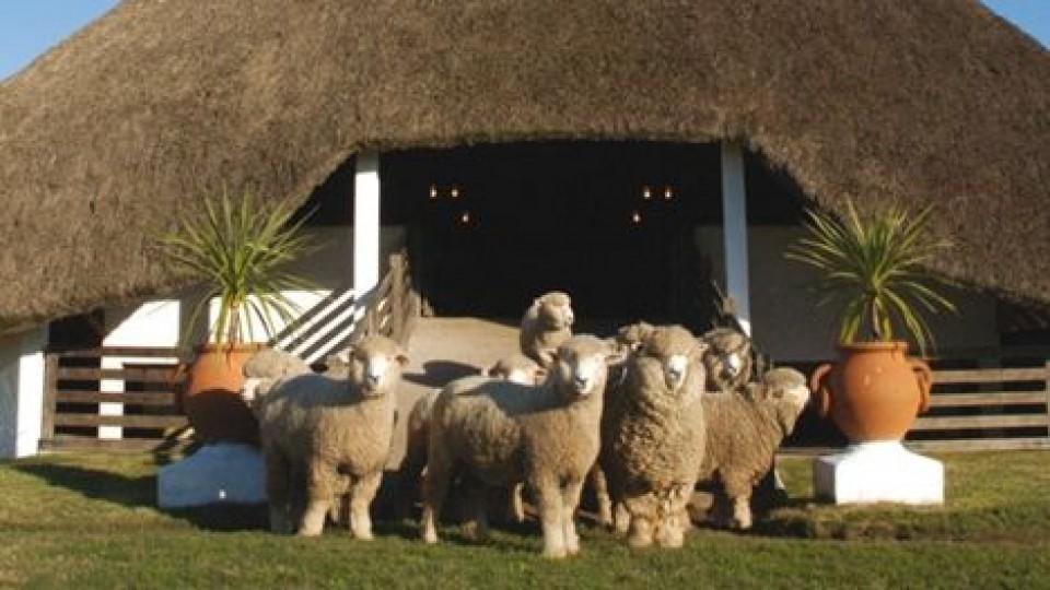 'Lomas del Verdún' pone lo más selecto en su 31er remate —  Ganadería — Dinámica Rural | El Espectador 810