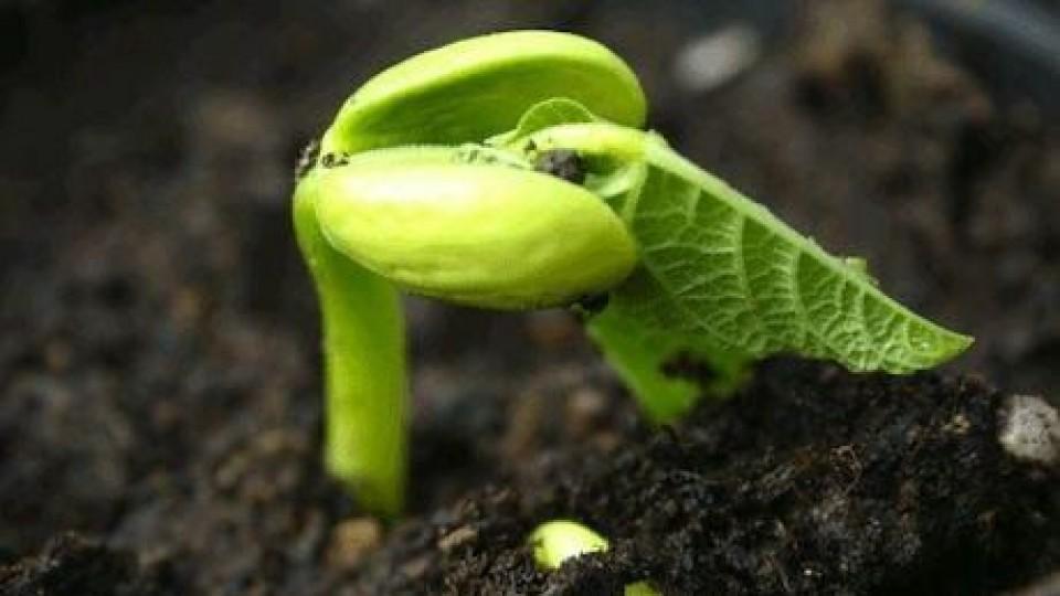 Biodinámica: Una alternativa para potenciar los cultivos, en la línea de la sostenibilidad y sustentabilidad —  Agricultura — Dinámica Rural | El Espectador 810