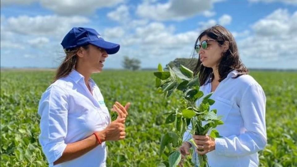 Dependiendo de las lluvias, en algunas zonas la soja se encuentra en mejor condición, por ejemplo, en la zona núcleo —  Agricultura — Dinámica Rural | El Espectador 810